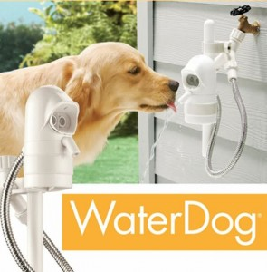 Contech-Water-Dog-Pet-Fountain-Main