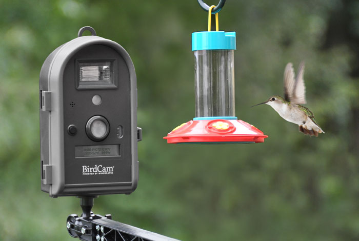 Wingscapes Birdcam Pro Helps You Capture Those Breathtaking