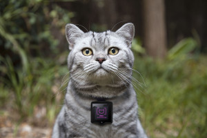 WHISKAS-CATSTACAM-the-device